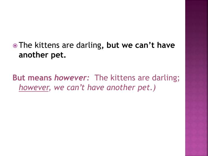 The kittens are darling