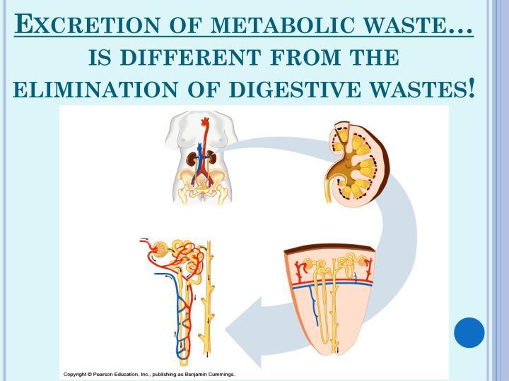 Excretion of metabolic waste…