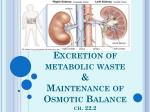 excretion of metabolic waste maintenance of osmotic balance ch 22 2