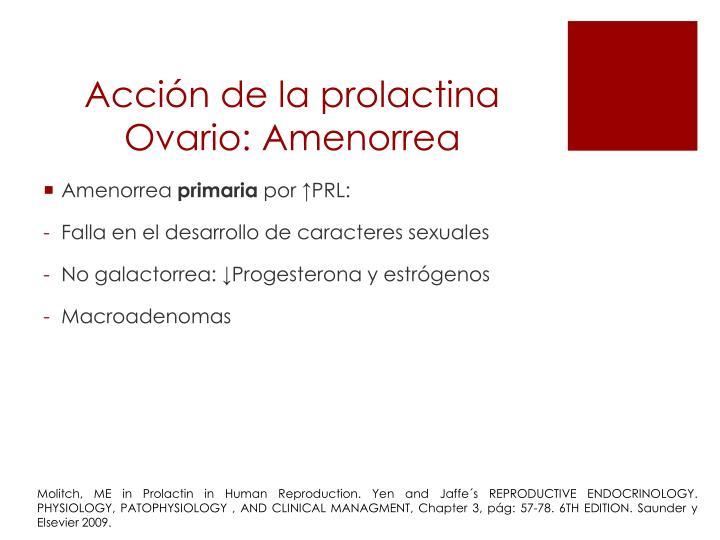 Acción de la prolactina