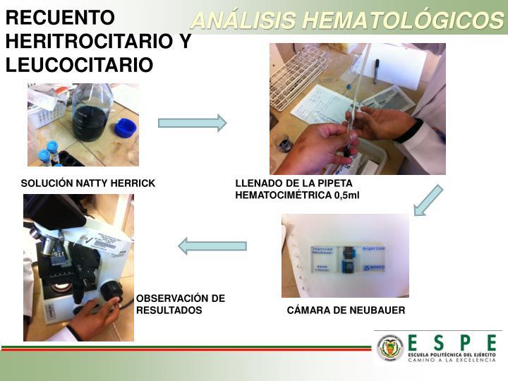 RECUENTO HERITROCITARIO Y LEUCOCITARIO