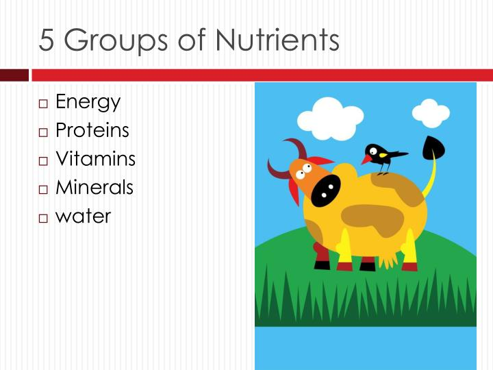 5 Groups of Nutrients