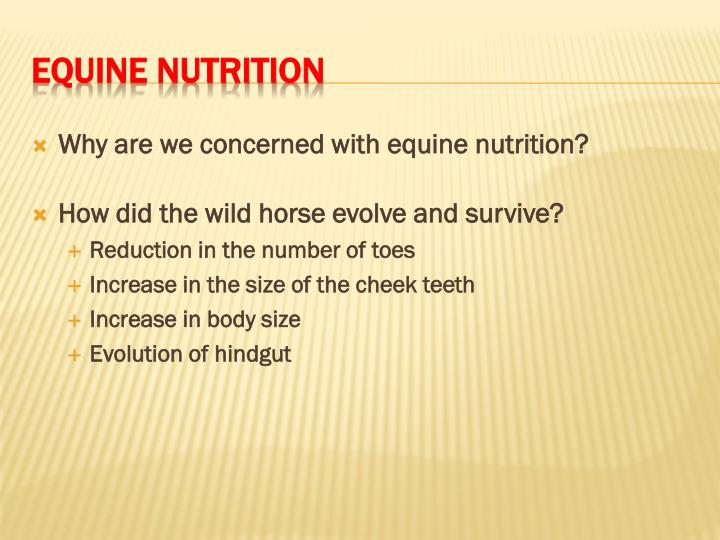Why are we concerned with equine nutrition?
