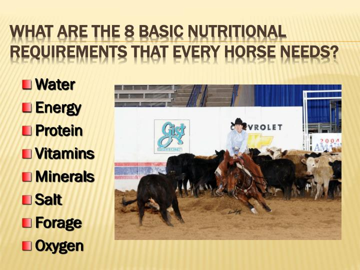 What Are the 8 Basic Nutritional Requirements That Every Horse Needs?