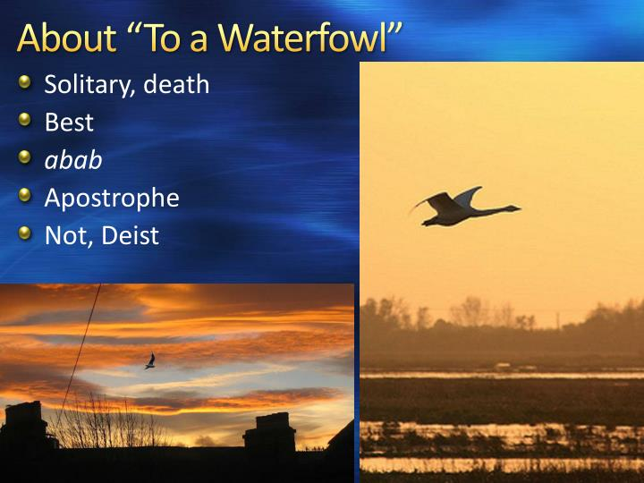 """About """"To a Waterfowl"""""""