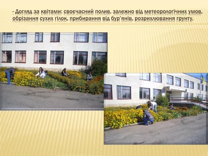 - Догляд за квітами: своєчасний полив, залежно від метеорологічних умов,