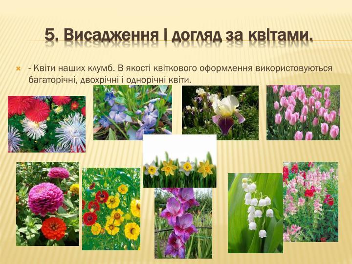 - Квіти наших клумб. В якості квіткового оформлення використовуються багаторічні, двохрічні і однорічні квіти.