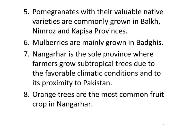 Pomegranates with their valuable native varieties are commonly grown in Balkh, Nimroz and Kapisa Provinces.