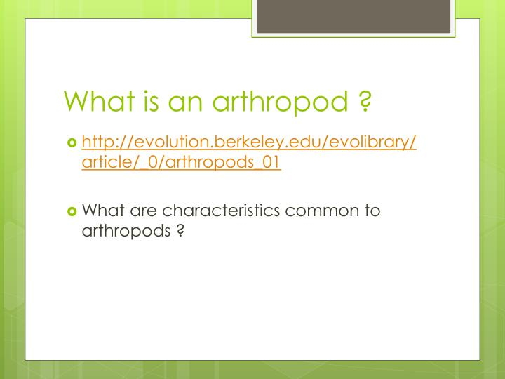 What is an a rthropod