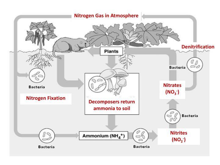 Nitrogen Gas in Atmosphere