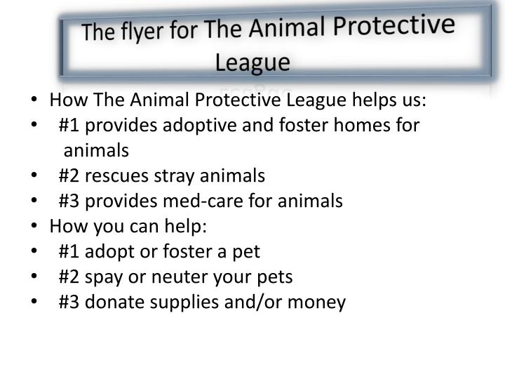 The flyer for The Animal Protective League