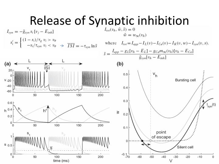 Release of Synaptic inhibition