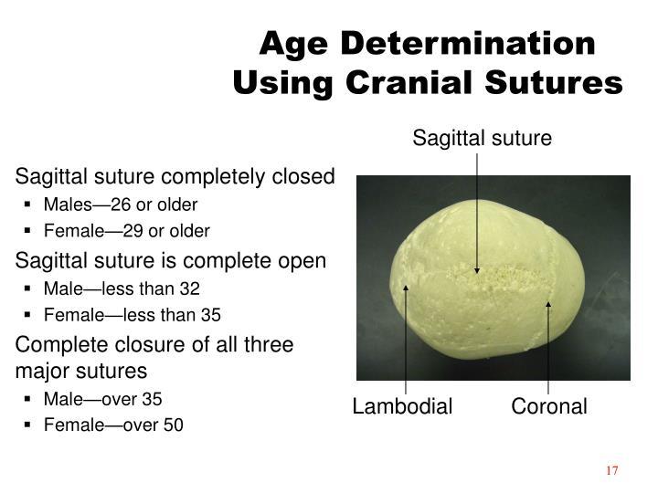 Age Determination Using Cranial Sutures