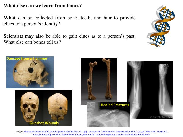 What else can we learn from bones?
