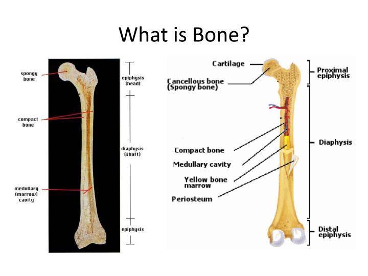 What is Bone?