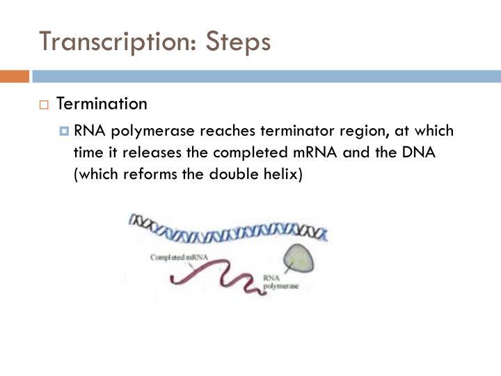 Transcription: Steps