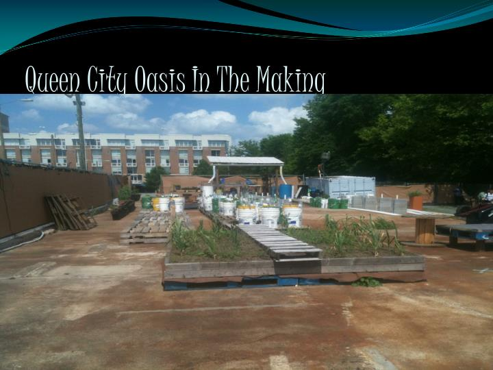 queen city oasis in the making