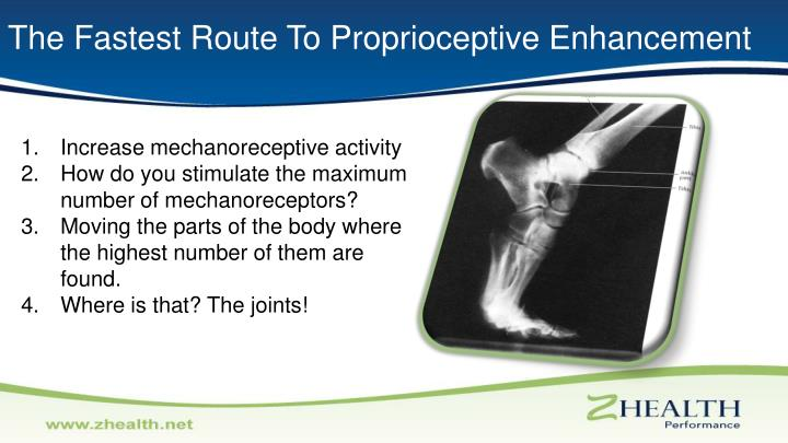 The Fastest Route To Proprioceptive Enhancement