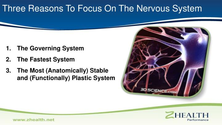 Three Reasons To Focus On The Nervous System