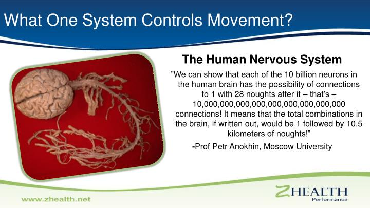 What One System Controls Movement?