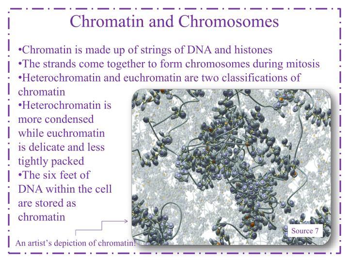 Chromatin and Chromosomes