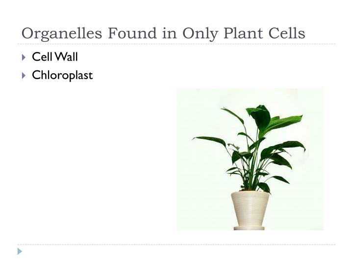 Organelles Found in Only Plant Cells