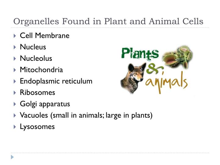 Organelles Found in Plant and Animal Cells