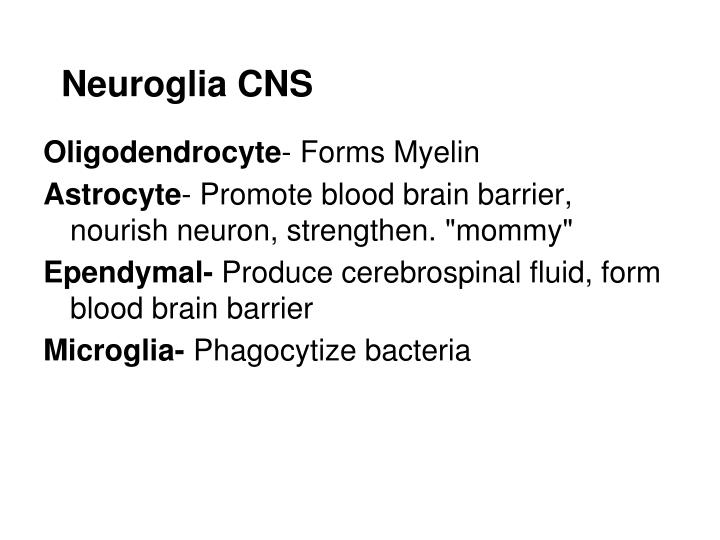 Neuroglia CNS