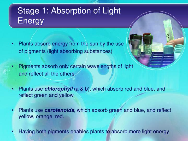 Stage 1: Absorption of Light Energy
