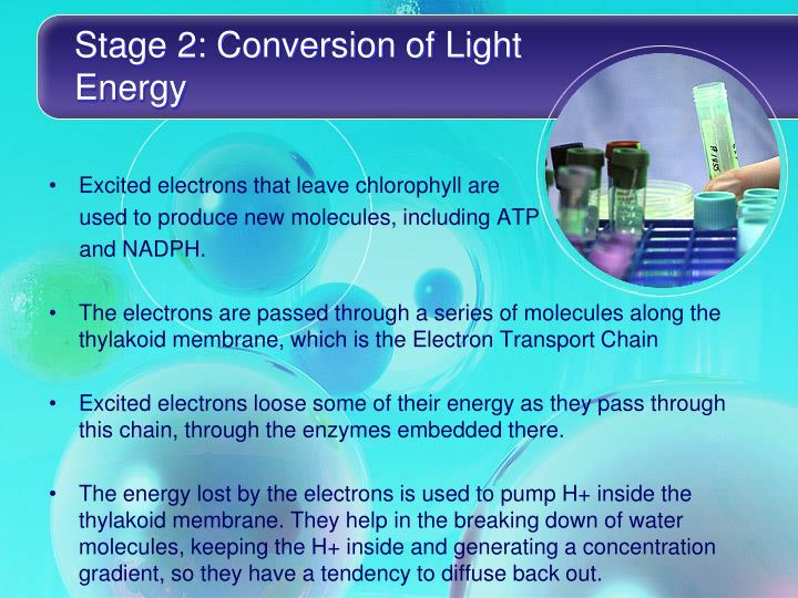 Stage 2: Conversion of Light Energy