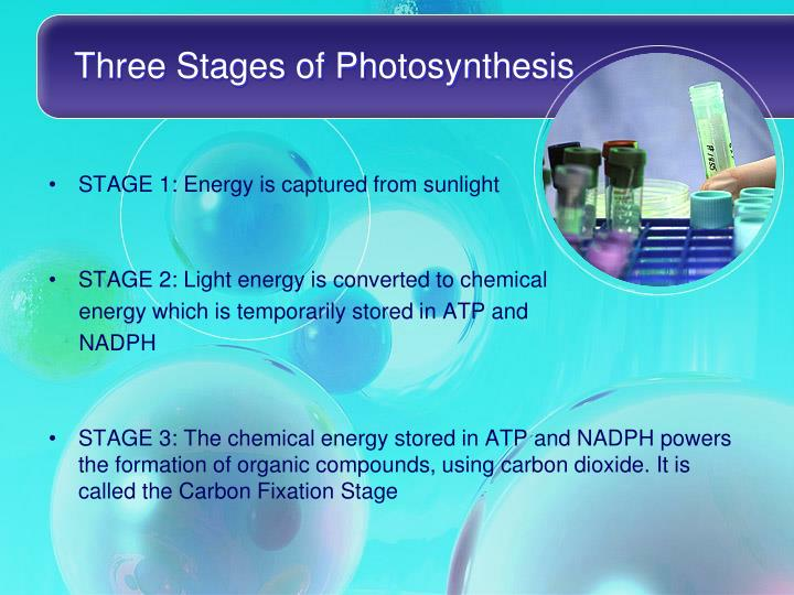 Three stages of photosynthesis