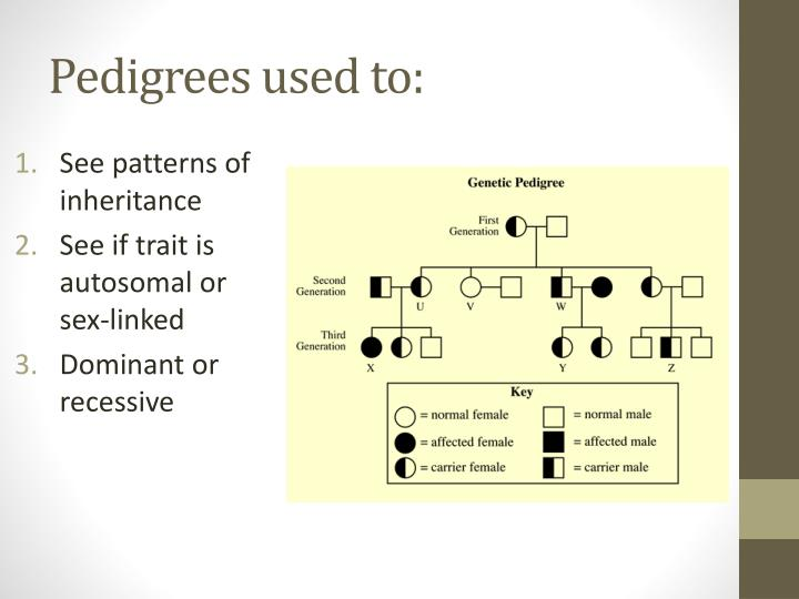 Pedigrees used to: