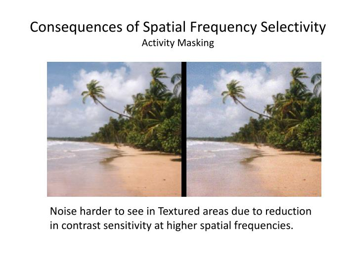 Consequences of Spatial Frequency Selectivity