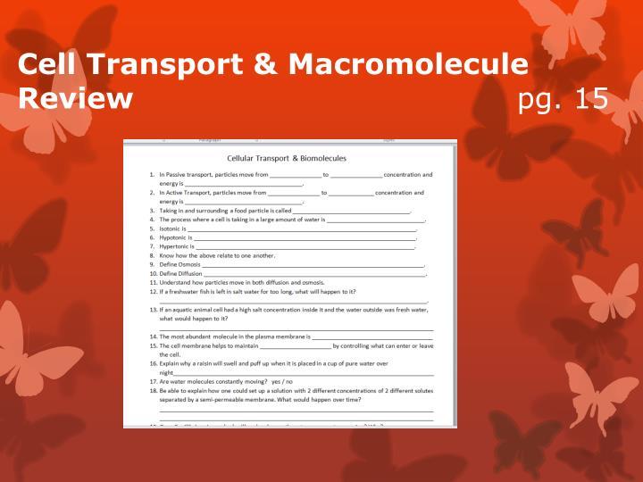Cell Transport & Macromolecule Review
