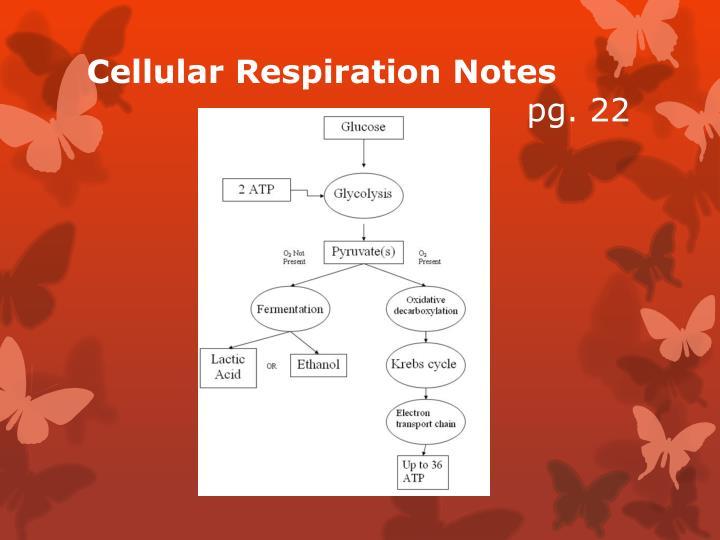 Cellular Respiration Notes