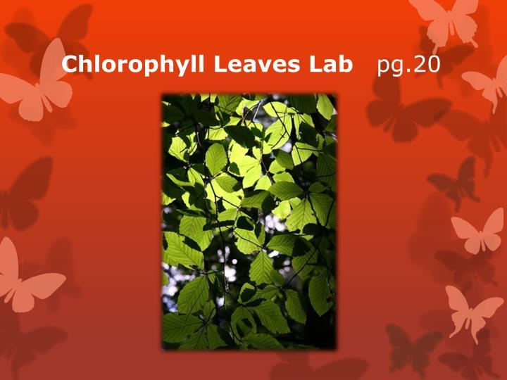 Chlorophyll Leaves Lab