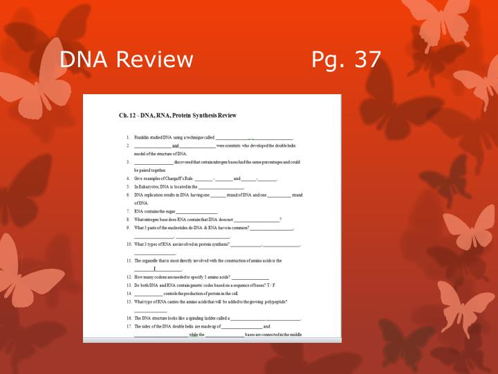 DNA Review               Pg. 37
