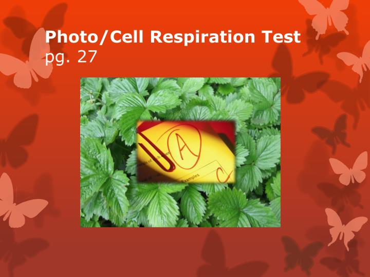 Photo/Cell Respiration Test