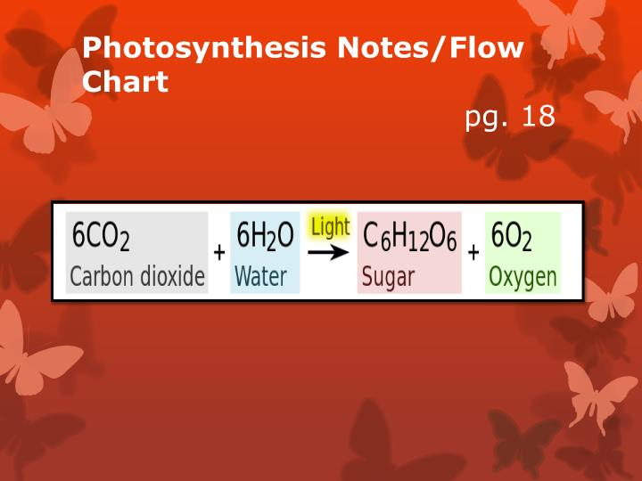 Photosynthesis Notes/Flow Chart
