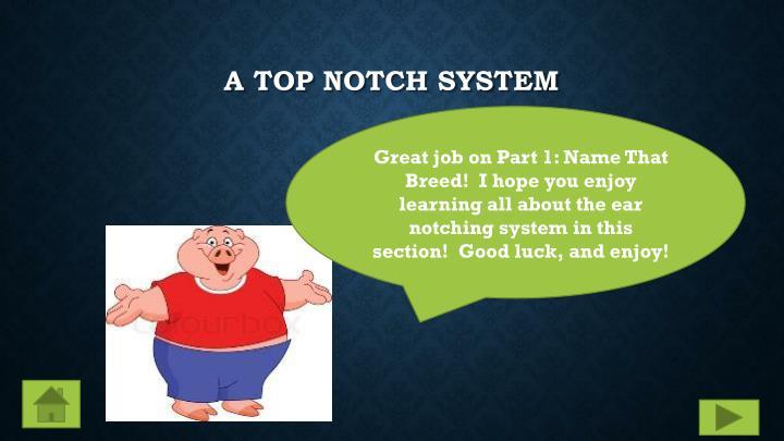 A Top Notch System