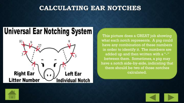Calculating Ear Notches