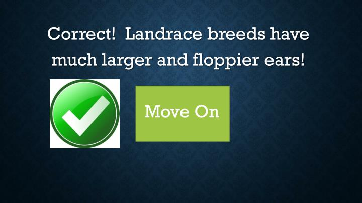 Correct!  Landrace breeds have much larger and floppier ears!