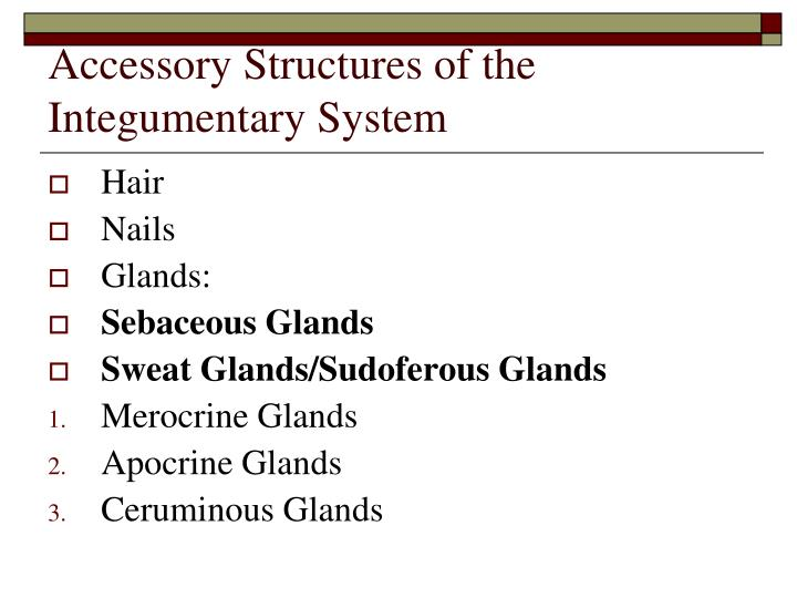 Accessory Structures of the Integumentary System