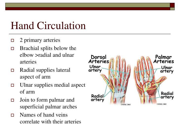 Hand Circulation