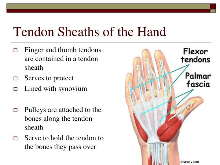 Tendon Sheaths of the Hand