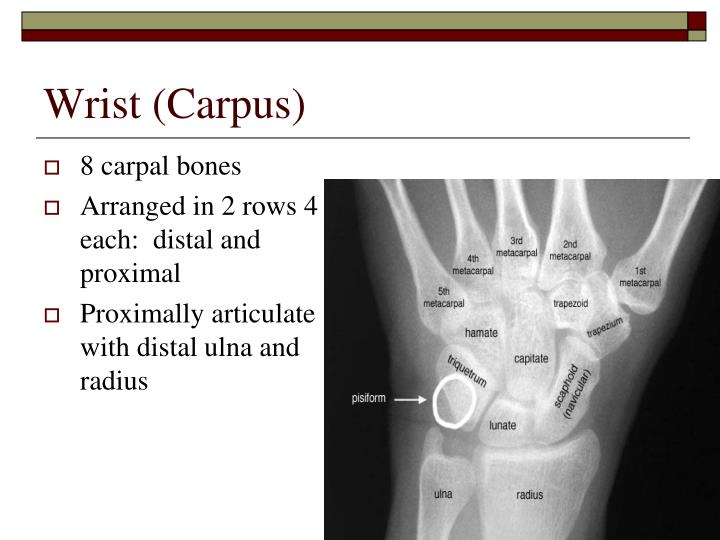 Wrist (Carpus)