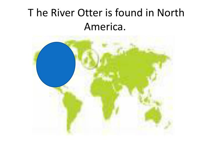 T he River Otter is found in North America.
