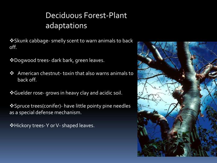 Deciduous Forest-Plant adaptations