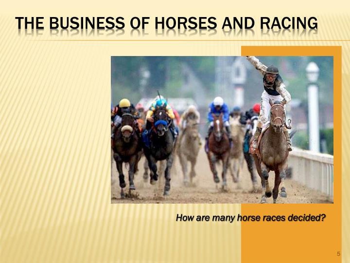 The Business of Horses and Racing
