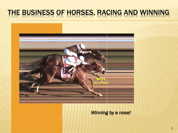 The Business of Horses, Racing and WINNING